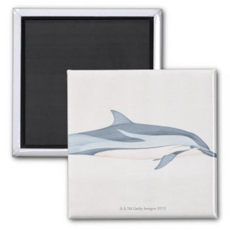 Striped Dolphin Magnet