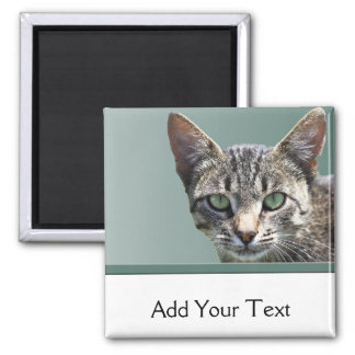 Striped Tabby with Green Eyes Square Magnet