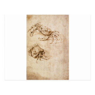 Studies of crabs by Leonardo da Vinci Postcard