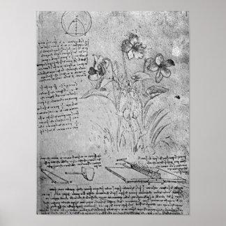 Studies of Violas Poster