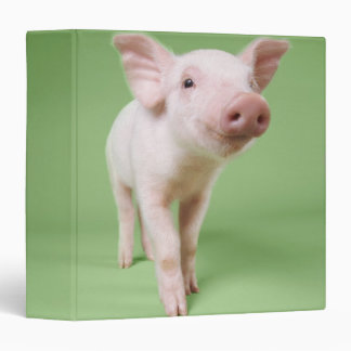 Studio Cut Out of a Piglet Standing 3 Ring Binders