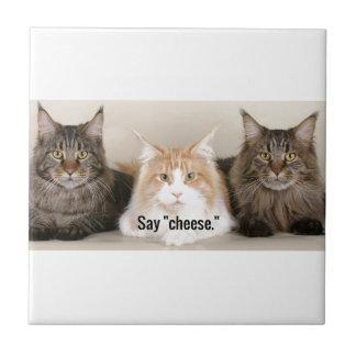 "Studio Photo - 3 Cats Saying ""Cheese"" Tile"