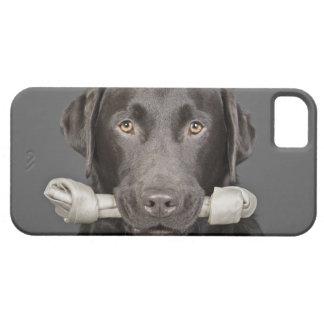 Studio portrait of Chocolate Labrador Case For The iPhone 5