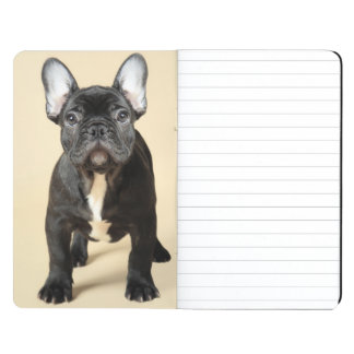 Studio portrait of French bulldog puppy standing Journal