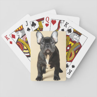 Studio portrait of French bulldog puppy standing Playing Cards