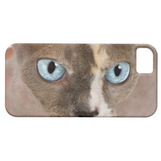 Studio portrait of Sphynx cat iPhone 5 Cases