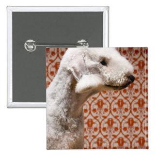 Studio shot of Bedlington Terrier 2 Inch Square Button
