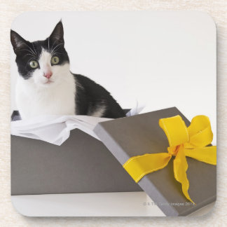 Studio shot of black and white cat in gift box beverage coasters