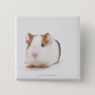 Studio shot of Guinea Pig 2 Inch Square Button