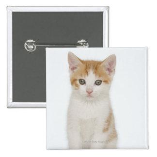Studio shot of kitten 2 inch square button