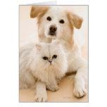 Studio tiré du chat et du chien carte de vœux