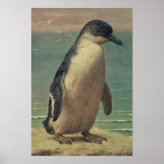 Study of a Penguin Print