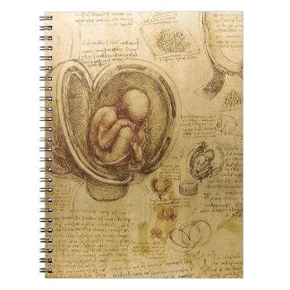 Study of baby fetus by Leonardo da Vinci Notebook