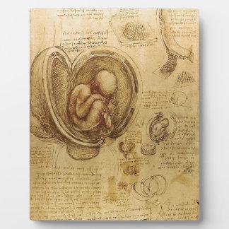 Study of baby fetus by Leonardo da Vinci Display Plaques