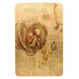 Study of baby fetus by Leonardo da Vinci Vinyl Magnet