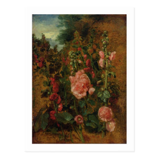 Study of Hollyhocks, c.1826 (oil on board) Postcard