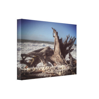 Stump in the Surf Canvas Print