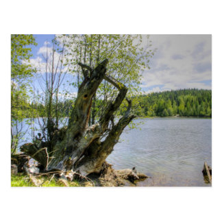 Stumped - Marshall Lake Postcard