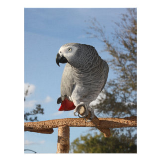 Stunning African Grey Parrot Customized Letterhead