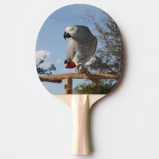 Stunning African Grey Parrot Ping-Pong Paddle