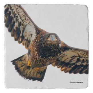 Stunning Bald Eagle Does a Flyover Trivet