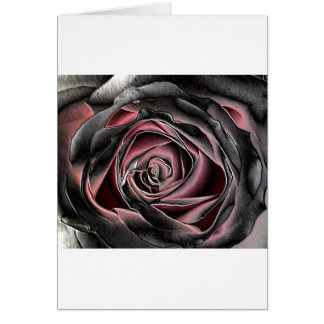 Stunning Black and Pink Rose Card