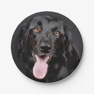 Stunning Black Hovawart Portrait 7 Inch Paper Plate
