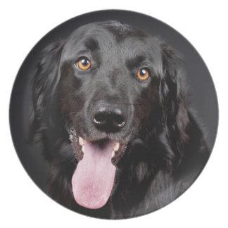 Stunning Black Hovawart Portrait Plate
