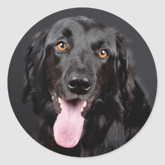 Stunning Black Hovawart Portrait Round Sticker