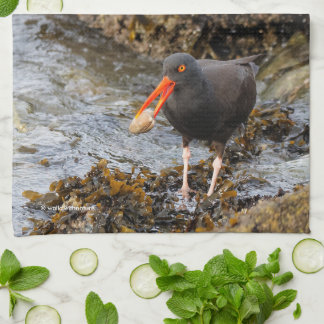 Stunning Black Oystercatcher with Clam Kitchen Towel