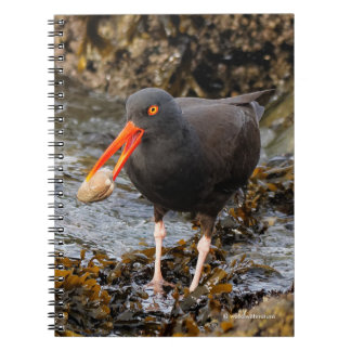 Stunning Black Oystercatcher with Clam Note Book