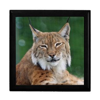 Stunning bobcat portrait gift box