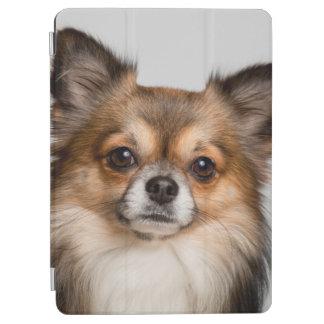 Stunning chihuahua portrait iPad air cover