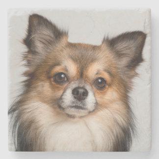 Stunning chihuahua portrait stone coaster
