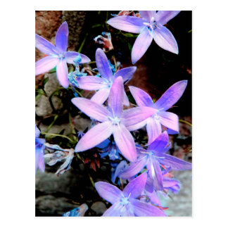 Stunning Delicate Lilac Abstract Wild Flowers Postcard