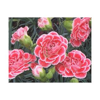 Stunning Dianthus Canvas Print