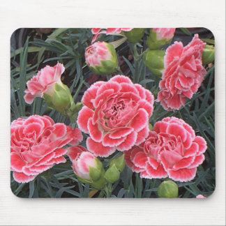 Stunning Dianthus Mouse Pad