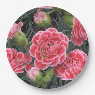 Stunning Dianthus Paper Plate