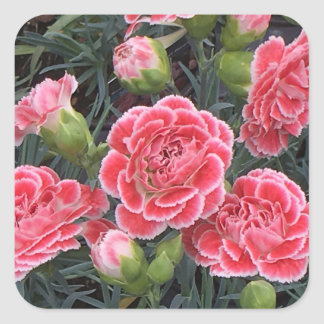 Stunning Dianthus Square Sticker