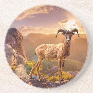 Stunning European Mouflon Coaster