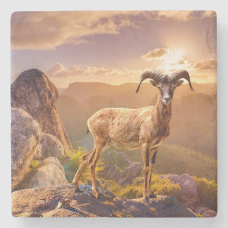 Stunning European Mouflon Stone Coaster