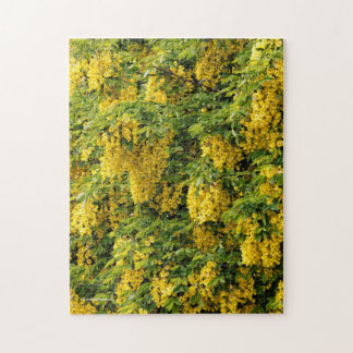 Stunning Golden Chain / Laburnum Tree Jigsaw Puzzle