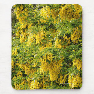 Stunning Golden Chain / Laburnum Tree Mouse Pad
