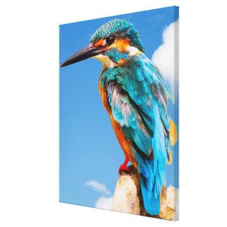 Stunning kingfisher canvas print