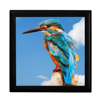 Stunning kingfisher gift box