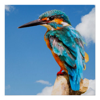 Stunning kingfisher poster