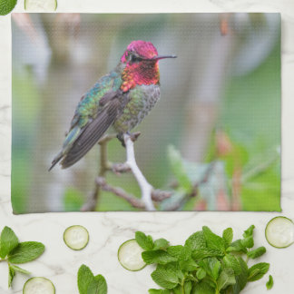 Stunning Male Anna's Hummingbird on the Plum Tree Kitchen Towel