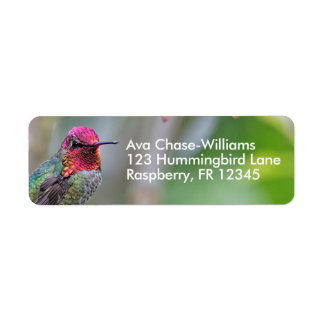Stunning Male Anna's Hummingbird on the Plum Tree Return Address Label