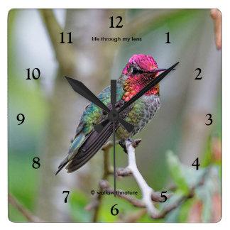 Stunning Male Anna's Hummingbird on the Plum Tree Square Wall Clock