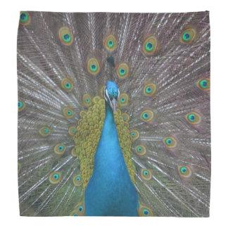 Stunning Peacock Bandana